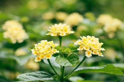Garden Workshop | Southern Garden Perennials