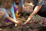 Family Gardening Workshop | Bulbs