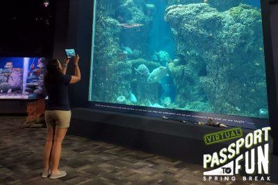 Virtual Passport to Fun: Spring Break with the Aquarium