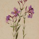 Forgotten World War II-Era Watercolor Paintings
