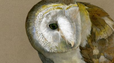 """Exhibition """"In and Out of the Wild: Animals in Art..."""